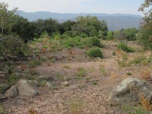Site Planning & Development: Ladera